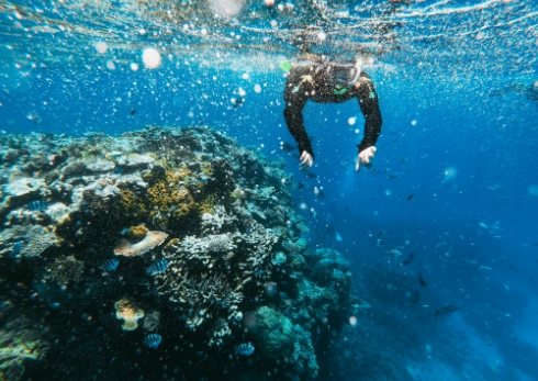 A student snorkeling in a coral reef in Australia