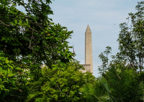 A view of the Washington Monument through leafy branches