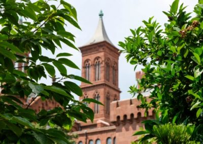 Tower on Smithsonian Castle with plants in the foreground