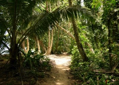 Sandy pathway through green trees in the Tortuguero National Park